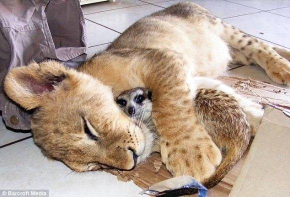 姿かたちは違っても、ずっとそばにいたいんだ。種を超えた動物たちの友情・愛情物語