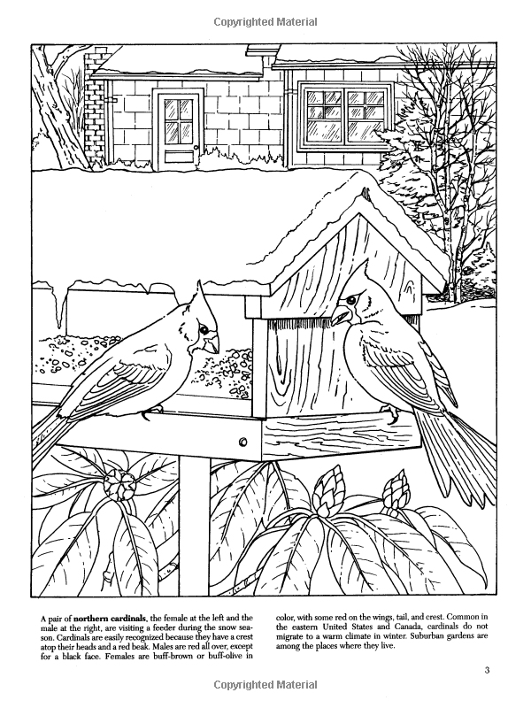 Backyard Nature Coloring Book Dover Nature Coloring Book Dot Barlowe 9780486405605 Amazon Com Books Coloring Books Color Dover