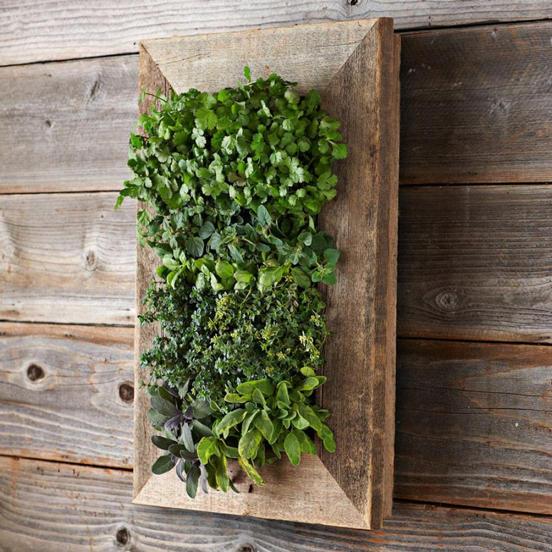 Reclaimed barn door vertical wall planter vertical wall for Living plant walls