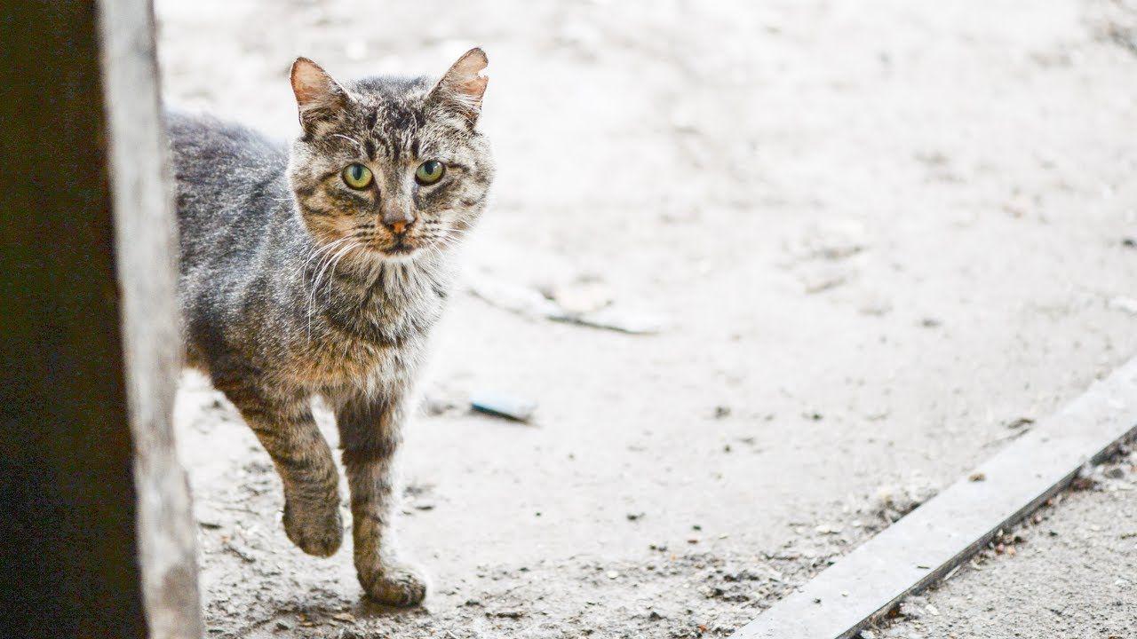 How to groom a feral cat, starring Grandpa Mason