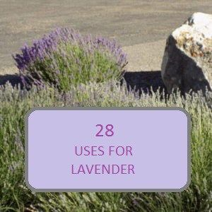 28 USES FOR LAVENDER - Reclaiming My Existance