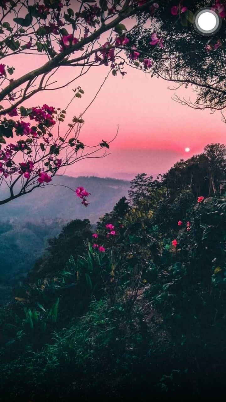 Aesthetic Wallpaper Aesthetic Wallpaper Iphone Aesthetic Background Iphone Wallpaper Flowers Beautiful Landscapes Aesthetic Backgrounds Nature Photography