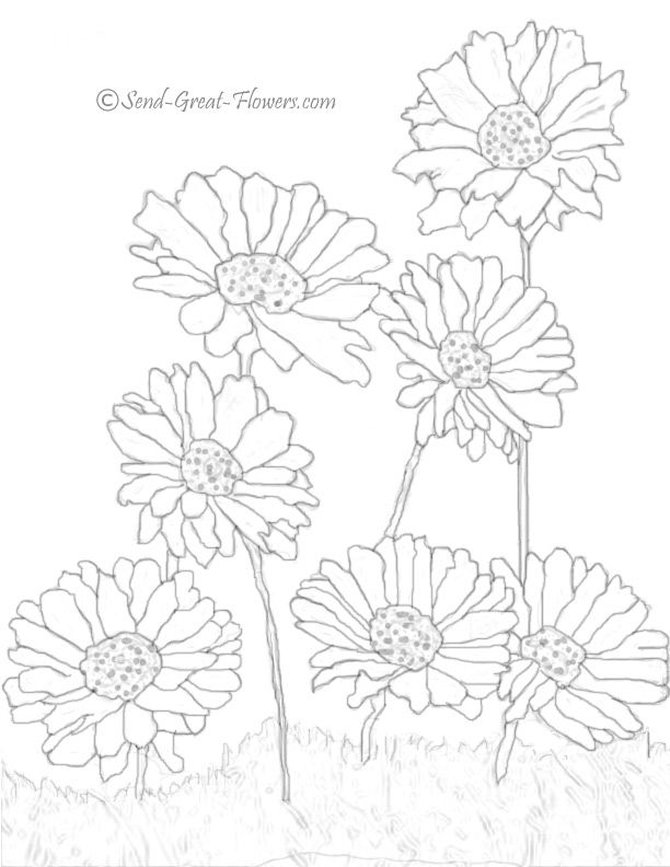 daisy flower coloring pages to see more free printable flower