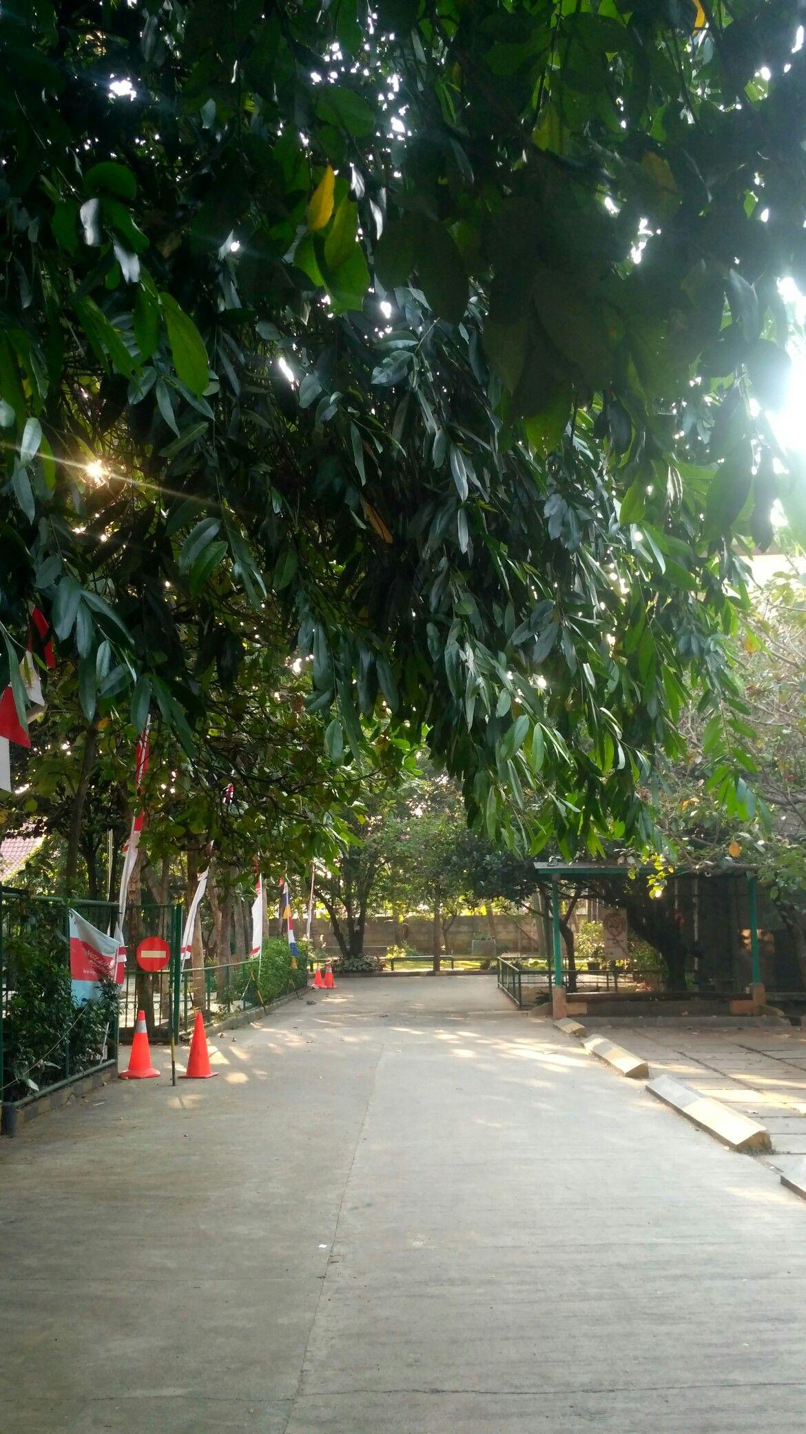 Pin Oleh Nur Fadillah Di Pemandangan Pemandangan Taman Sekolah