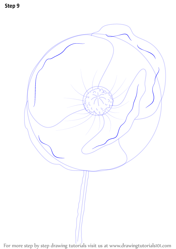 Learn how to draw poppy flower poppy step by step drawing learn how to draw poppy flower poppy step by step drawing tutorials mightylinksfo Image collections