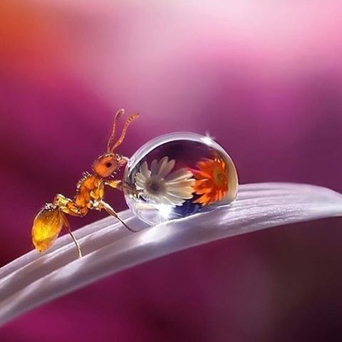 Follow @wonderful.globe for more amazing nature/travel posts  Ant flowers in Drop | Photograph By @sergey_polyushko