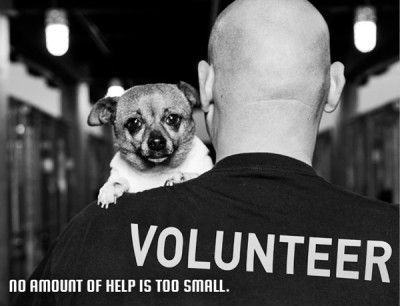 Help All Los Angeles Animal Shelters Become No Kill Adopt Animal Shelter Animals No Kill Animal Shelter