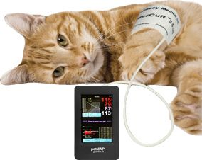 Image result for cat blood pressure