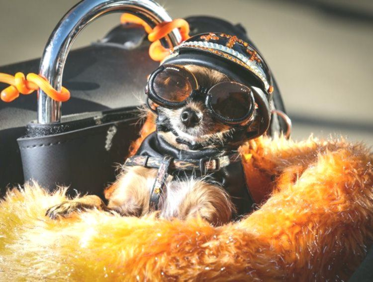 Tinkerbell the Flaming Bedazzled Motorbike and its Biker Canine Diva Biker Woman Bling