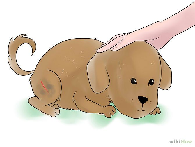 How To Clean A Dog S Wound Dog Wound Dog Wound Care Dog Care