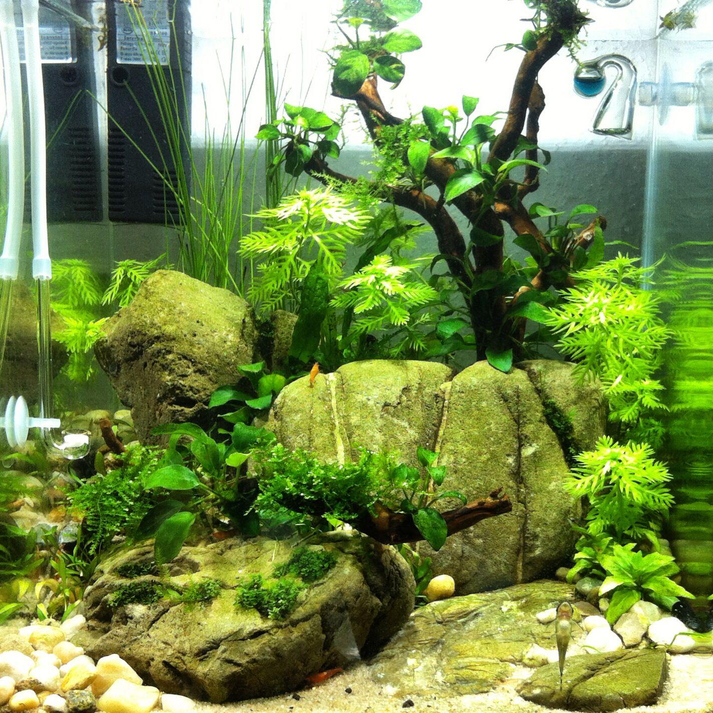 30l cube aquascaping pinterest aquariums for Aquarium cube