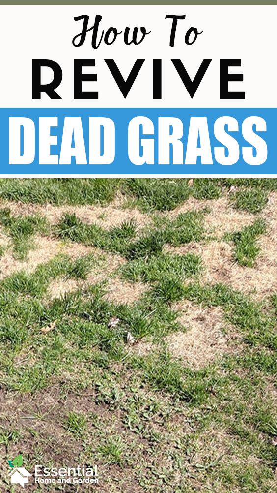 Pin On Grass Sod Turf