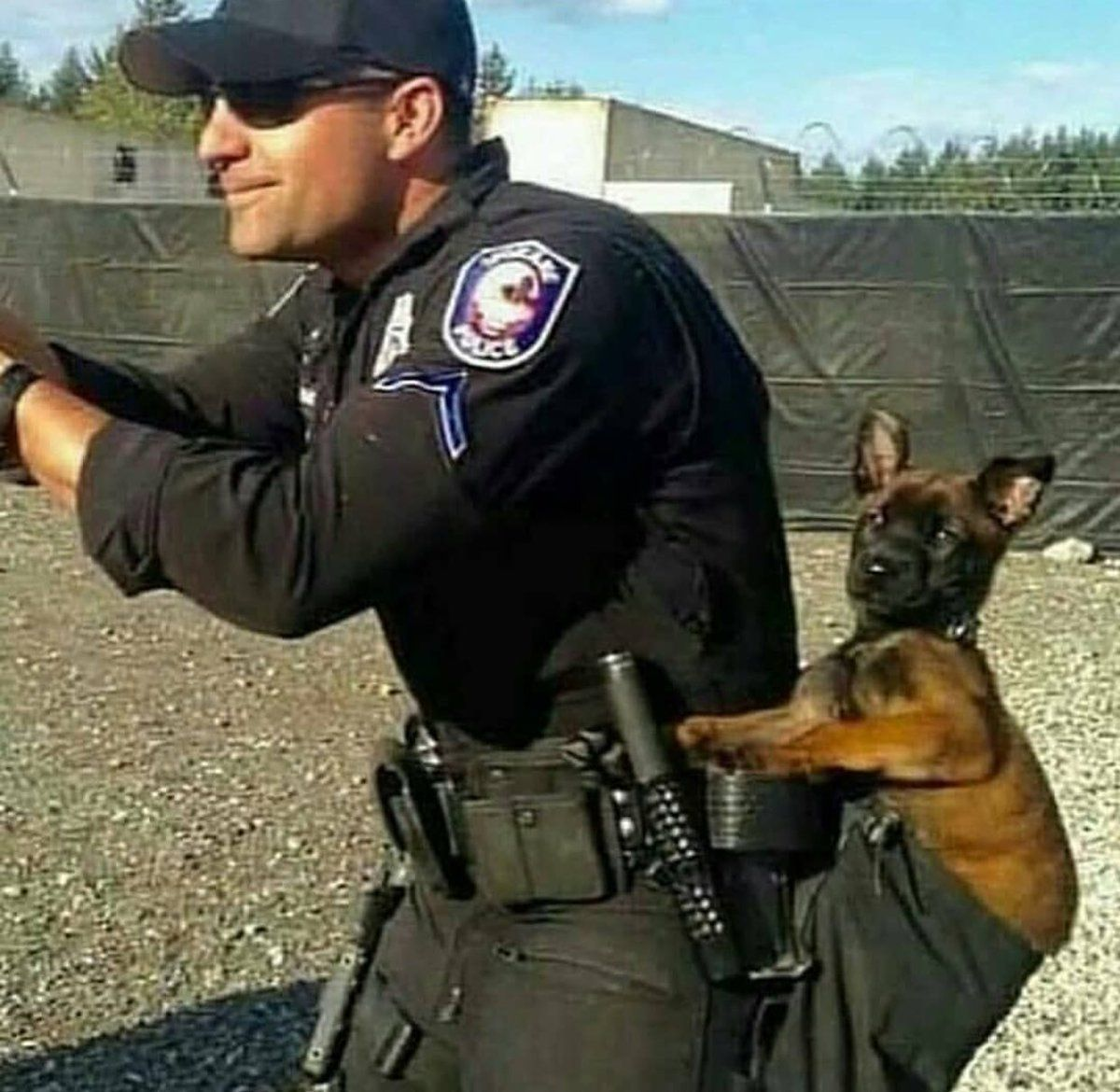 Pin By Paula Whitney On Dog Lovers Club Malinois Dog Military Dogs Military Working Dogs