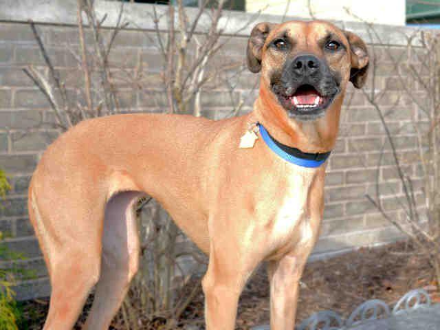 St Louis Pet Adoption Pet Adoption Humane Society Dog Adoption