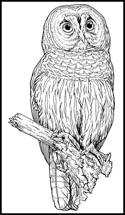 Wilderness Animals Coloring Books Pages