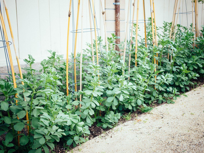 Drought Tolerant Vegetable Garden Veggies To Grow During 400 x 300