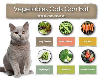 cat nutrition diet  cat nutrition carrots and green