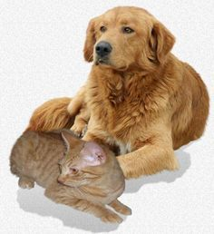 Epilepsy In Your Pet Seizures In Dogs And Cats Dog Seizures