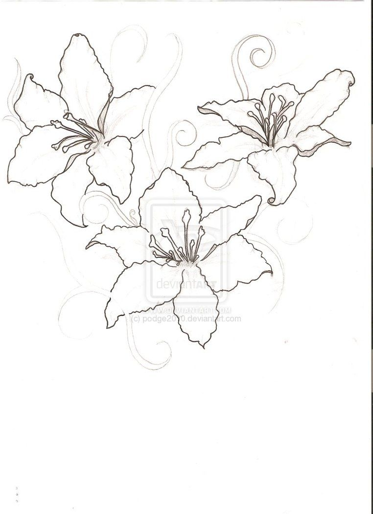 Lily Outline Google Search Flower Tattoos Flower Outline Tropical Flower Tattoos