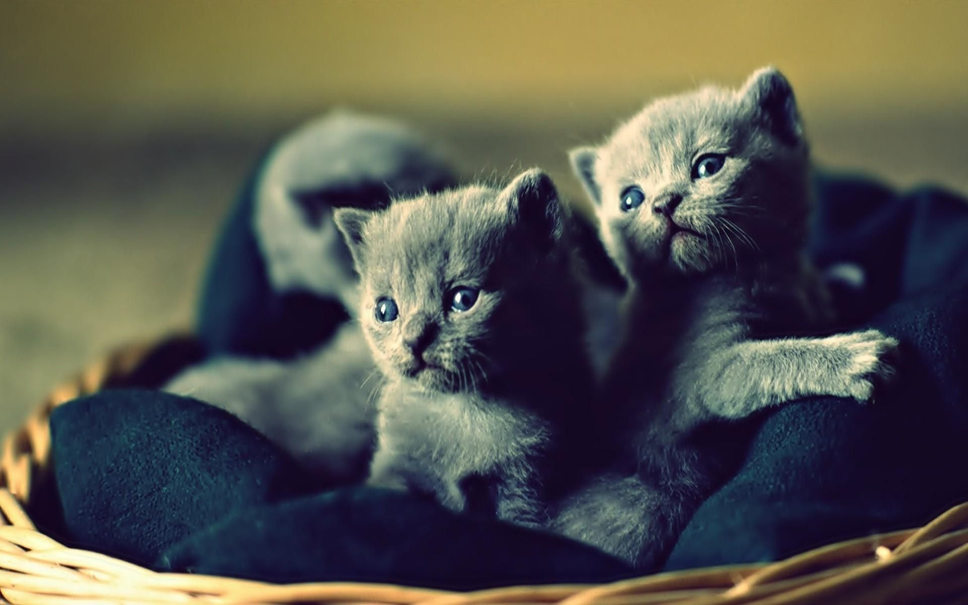 Cat Baby Animals Kittens Hd Wallpapers Desktop Backgrounds Mobile Wallpapers 1920x1200 26461 Baby Animals Cute Animal Videos Kittens