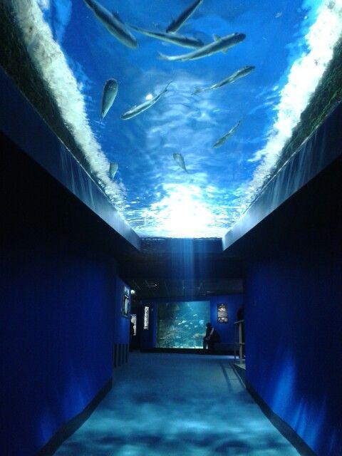 Plus Grand Aquarium Du Monde : grand, aquarium, monde, êtes, Passage, Rochelle..., Visitez, L'Aquarium,, Grands, D'Europe, Partez, Découverte, Monde…, Charente, Maritime,, Rochelle,, Tourisme