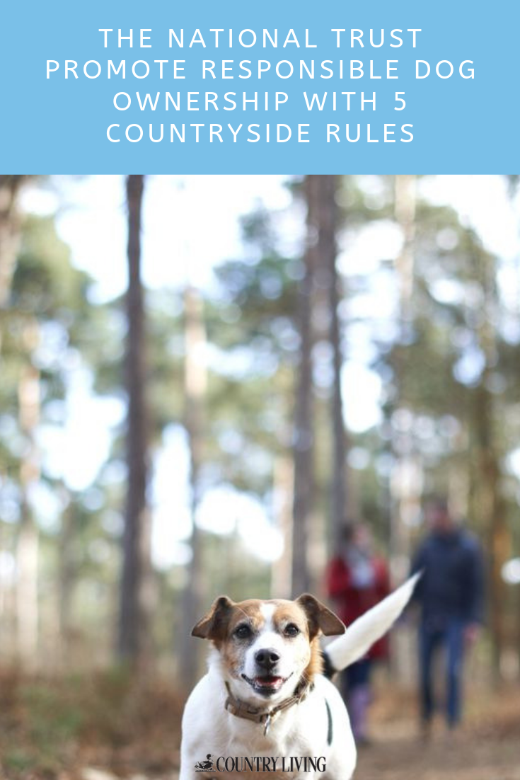 The National Trust Promote Responsible Dog Ownership With 5 Countryside Rules Dog Ownership Dogs Countryside