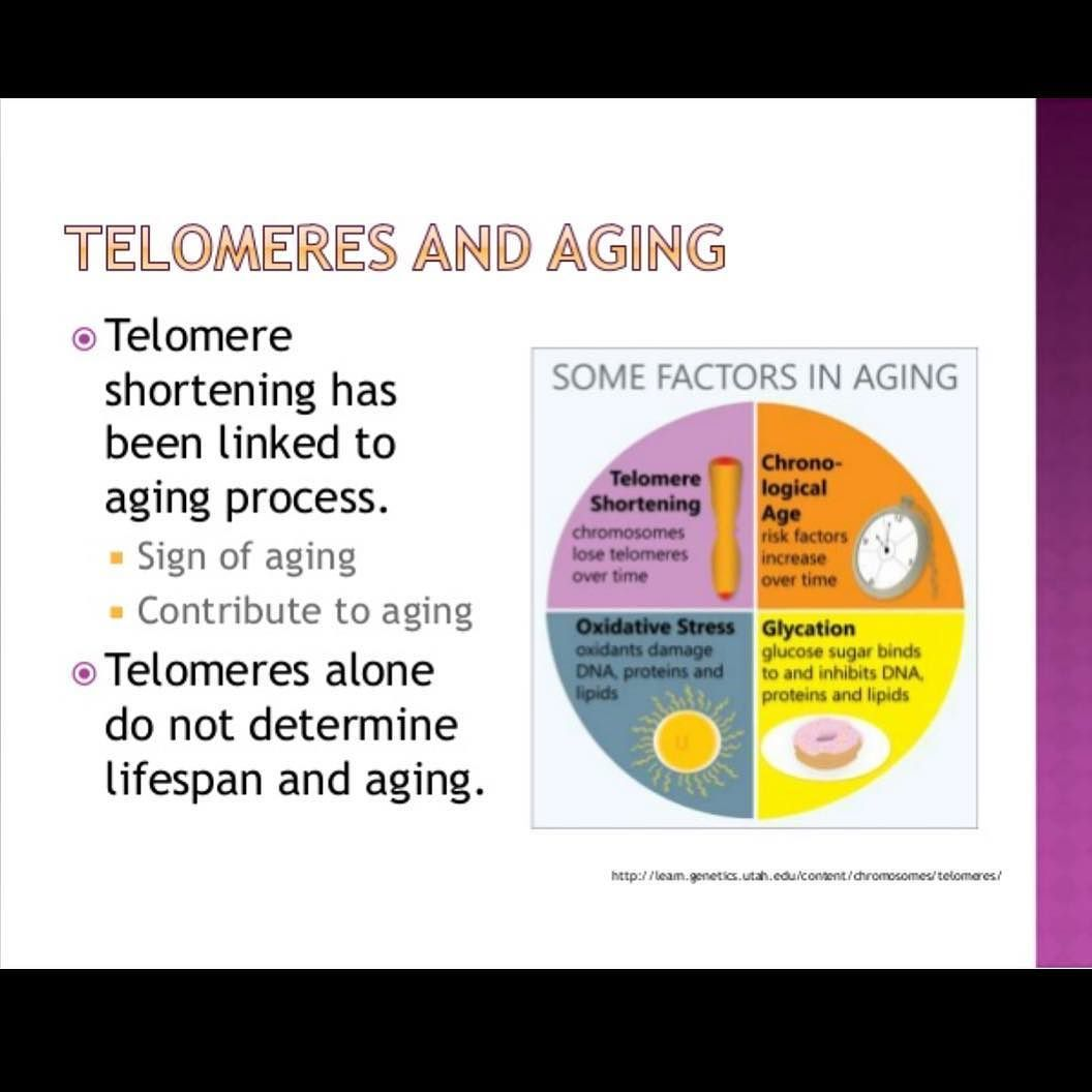 telomeres effect of length of the cell Effects of initial telomere length distribution on  32 telomeres of the cell shorten  a change in the length unit as the lenghts of the telomeres are.