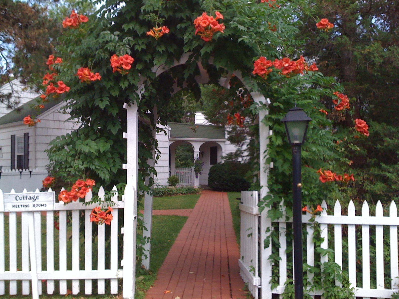 picket fence gate with arbor. Classic Picket Fence Gate With Trumpet Vine Arbor