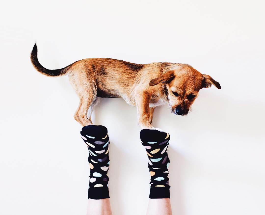 Why Does My Dog Steal Socks? Happy socks, Dogs, Socks