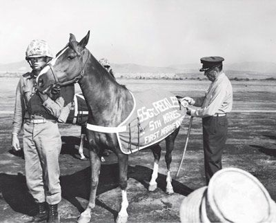 Sgt. Reckless! She started out as a simple pack horse and ended up with 8 awards for her service including 2 Purple Hearts as well as a French Fourragere and Staff Sergent chevron. She retired at Camp Pendleton and continued to be a favorite Marine Mascot until her death in 1968.