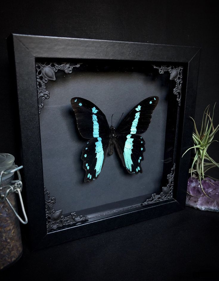 Photo of Gothic Décor, Macabre Art, Butterflies, Nature, Insects, Moth, Beetle, Spider, …