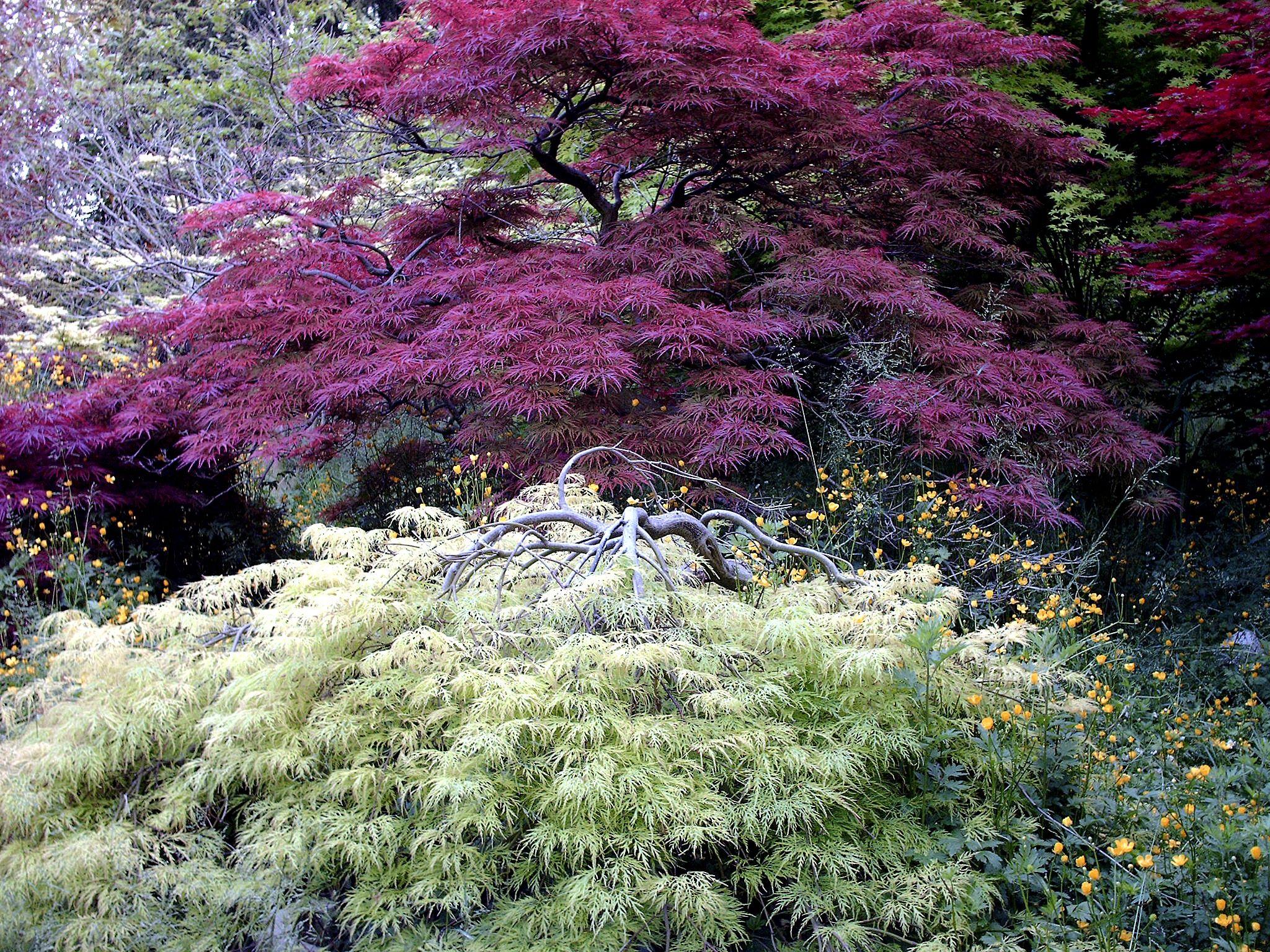 ... a walk in my garden ... by studiodobs on 500px