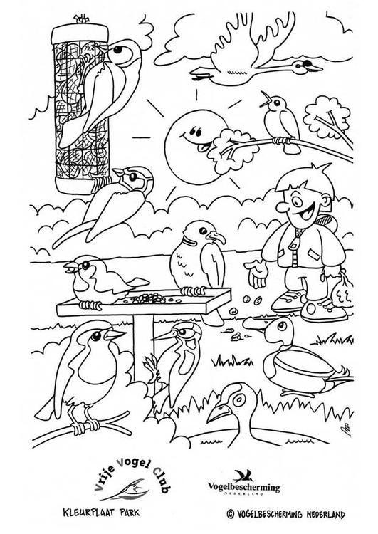 vogels in het park vogels winter bomen
