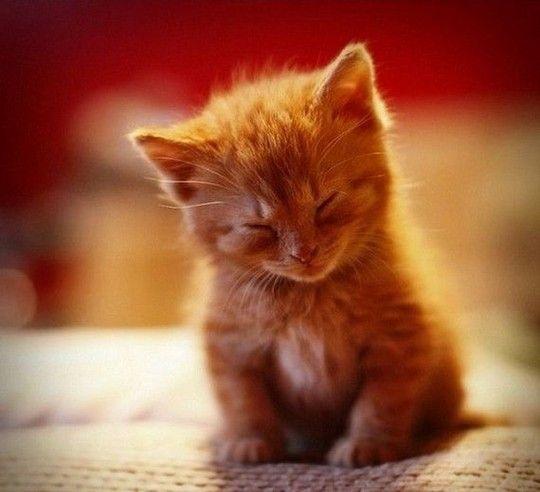 kittens25