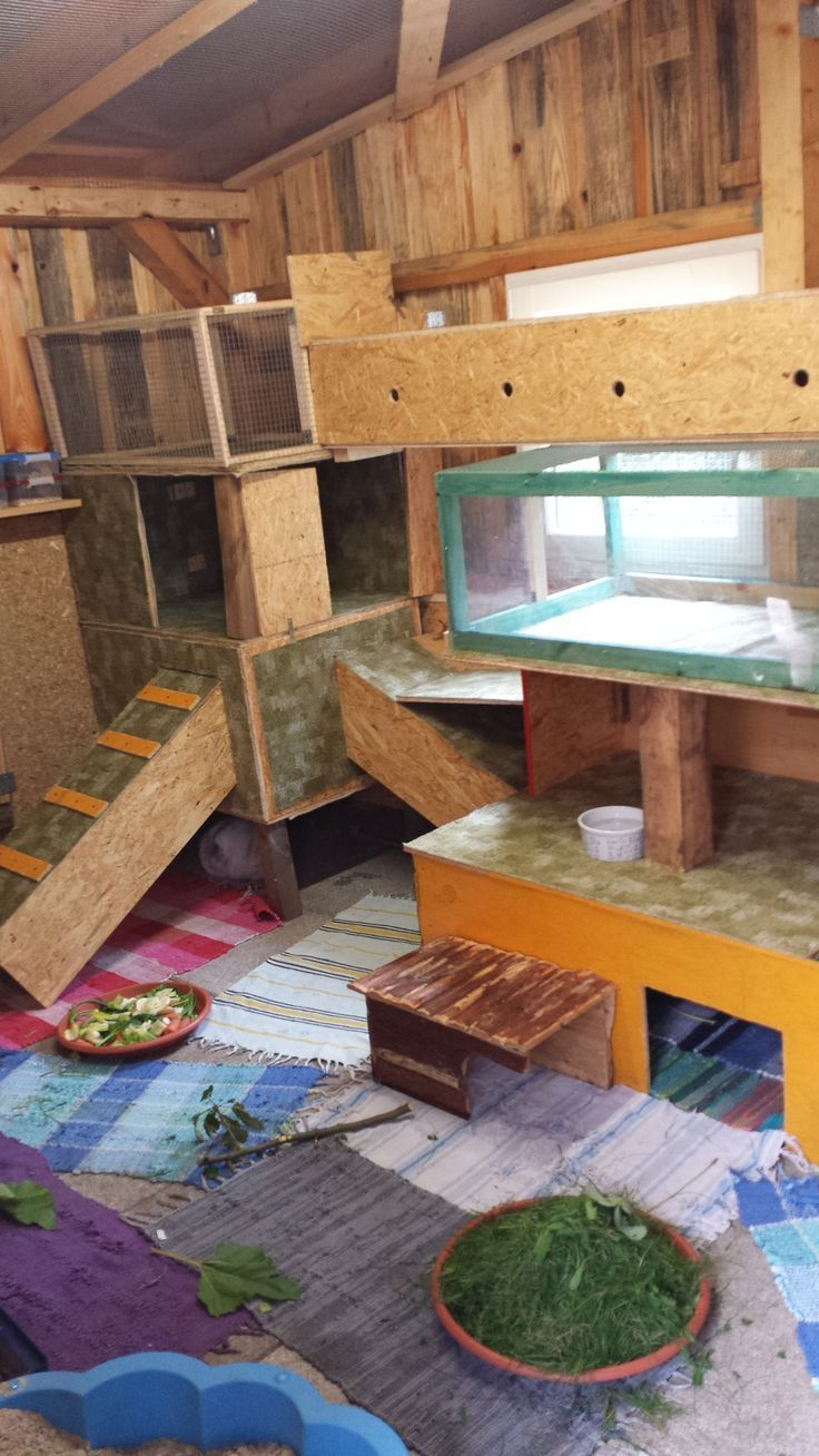 Awesome playroom setup for small pets. The food isn't