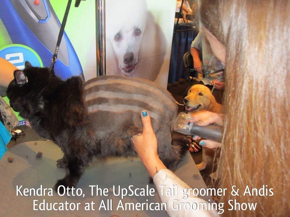 Cat grooming at napervilles pet