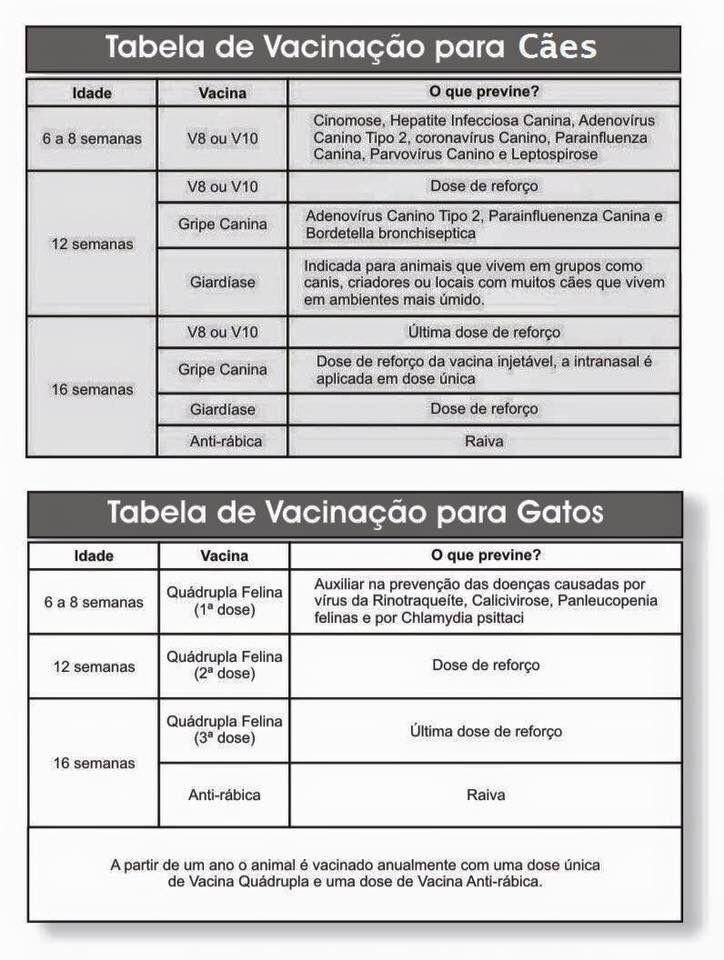 Liczba pomysłów na temat Tabela De Vacinação na Pintereście 17 - job application form in pdf