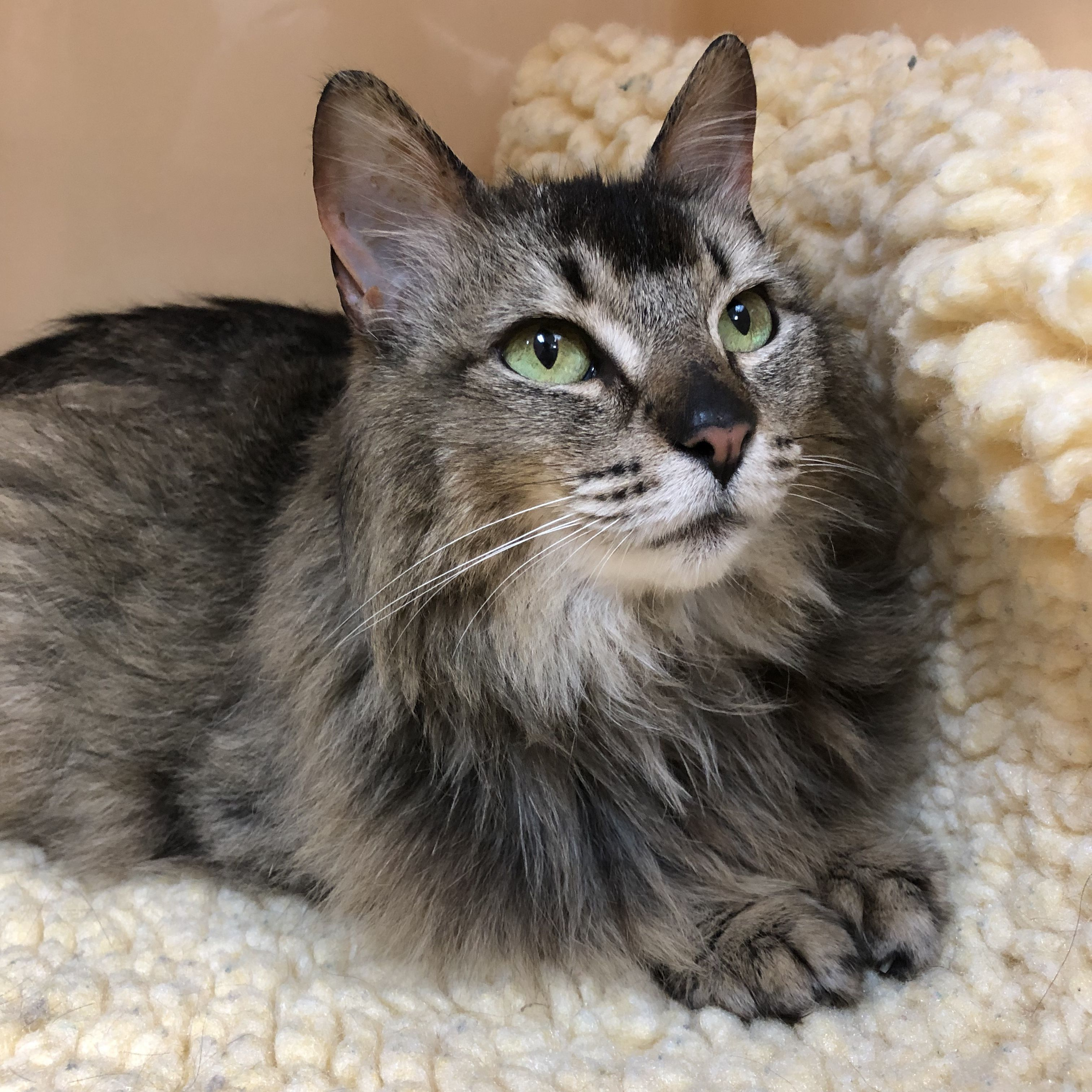 Pin on cats for adoption