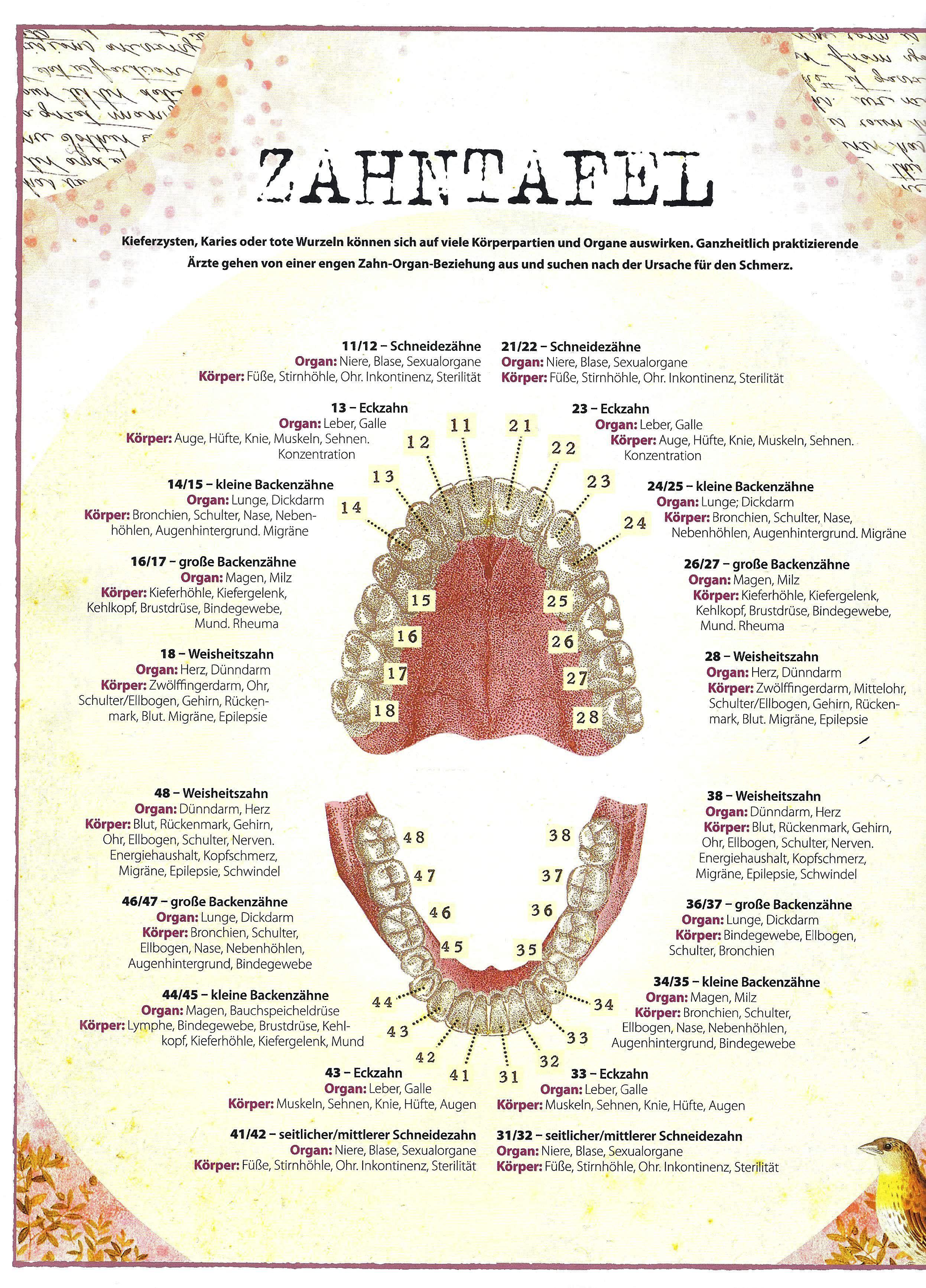 Bildergebnis für psychosomatik und zähne | Heilkräfte | Pinterest ...