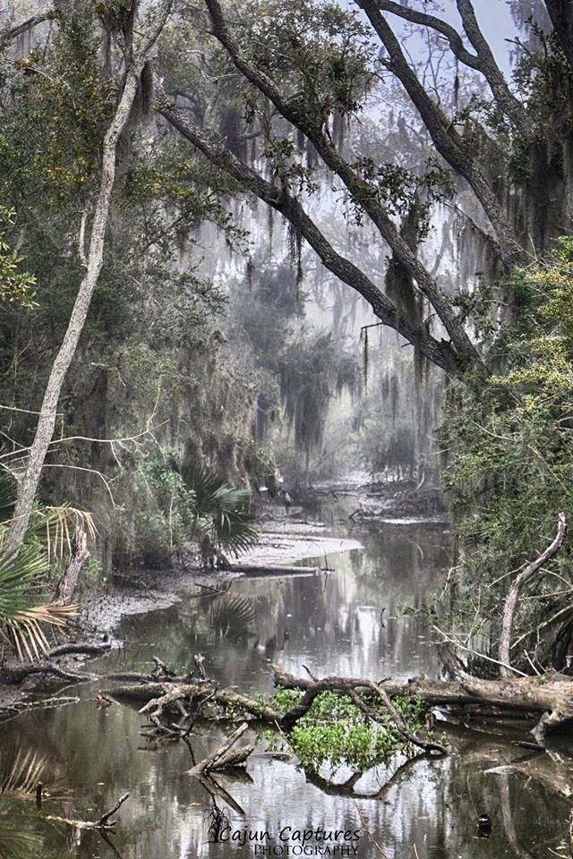 Pin By Anne Moody On Wood Burning Tool Louisiana Swamp Beautiful Nature Nature Pictures