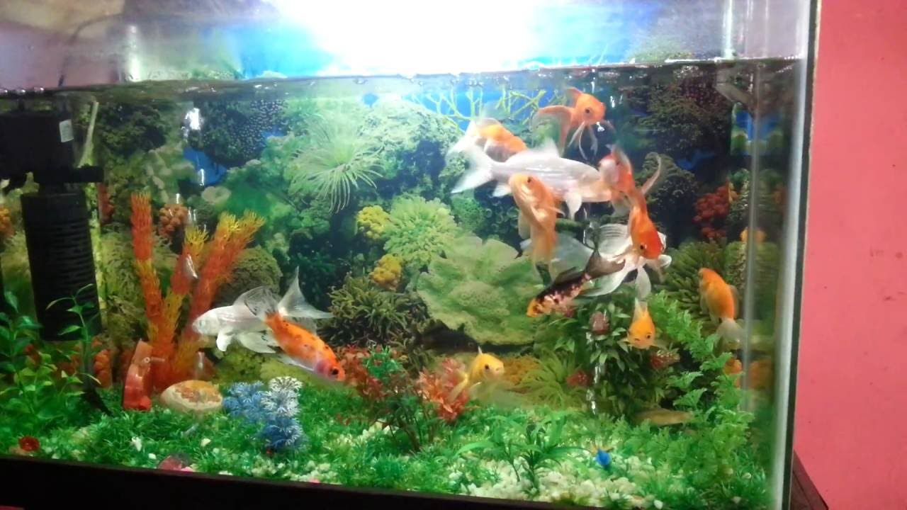 Fish Quarium Fish Youtube