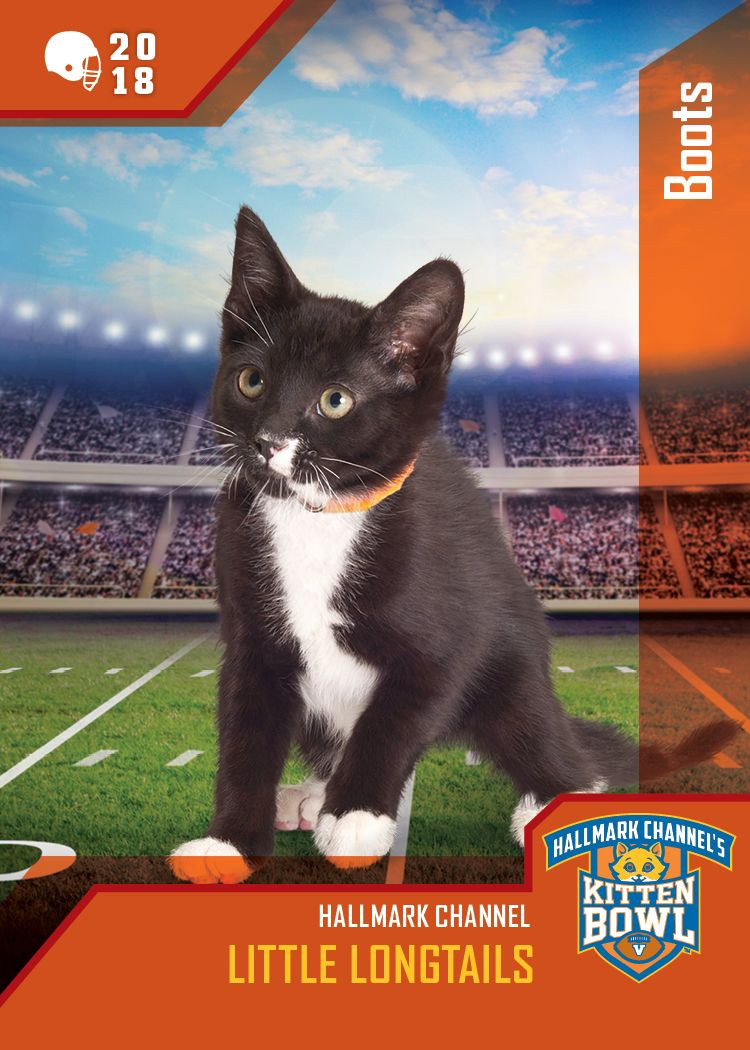 Kitten Bowl V Little Longtails Boots Is Ready To Take The Field On February 4 12 1c On Hallmark Channel Kittenbowl Kitten Bowls Hallmark Channel Kitten