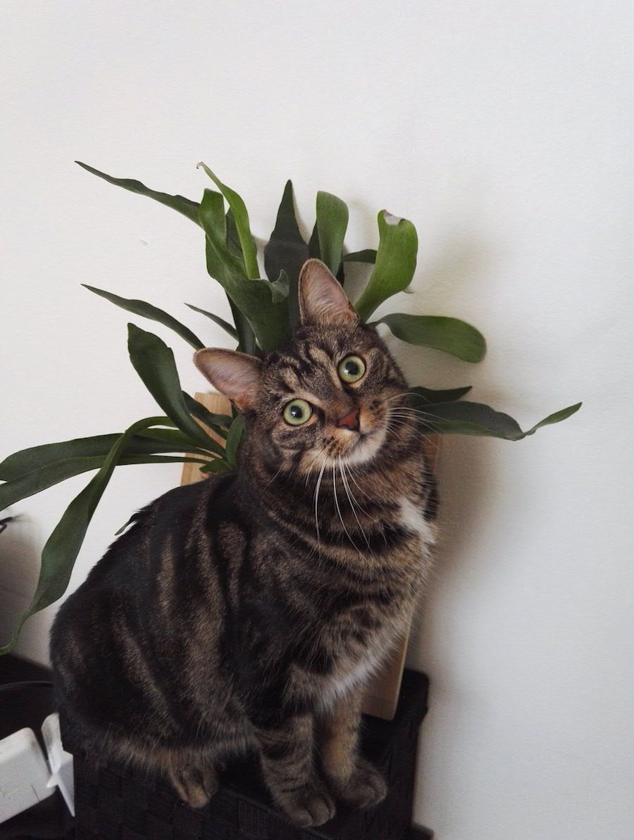 How to keep cats out of houseplants Cats, Indoor plant