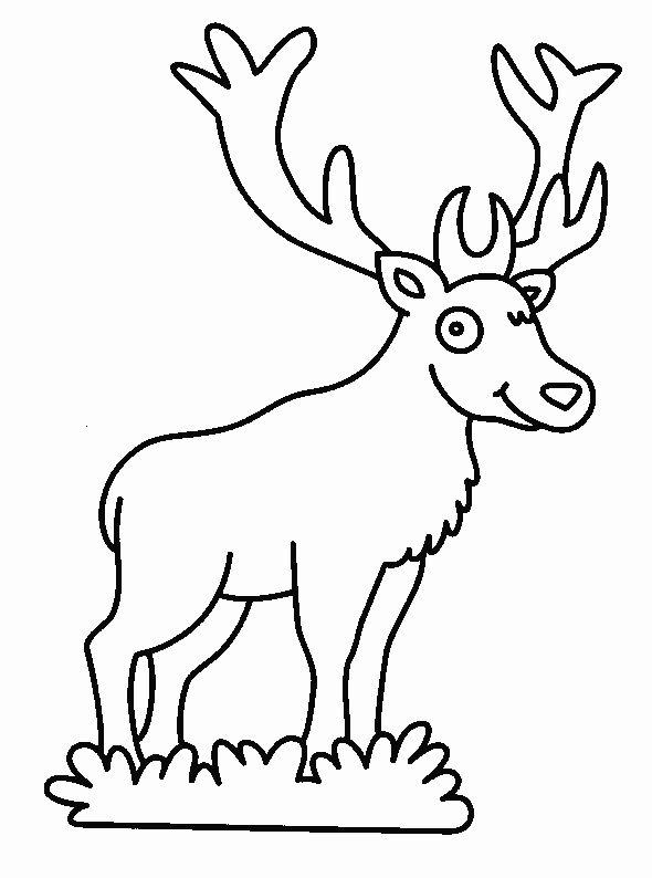 Fargelegging Dyr. Tegninger 197