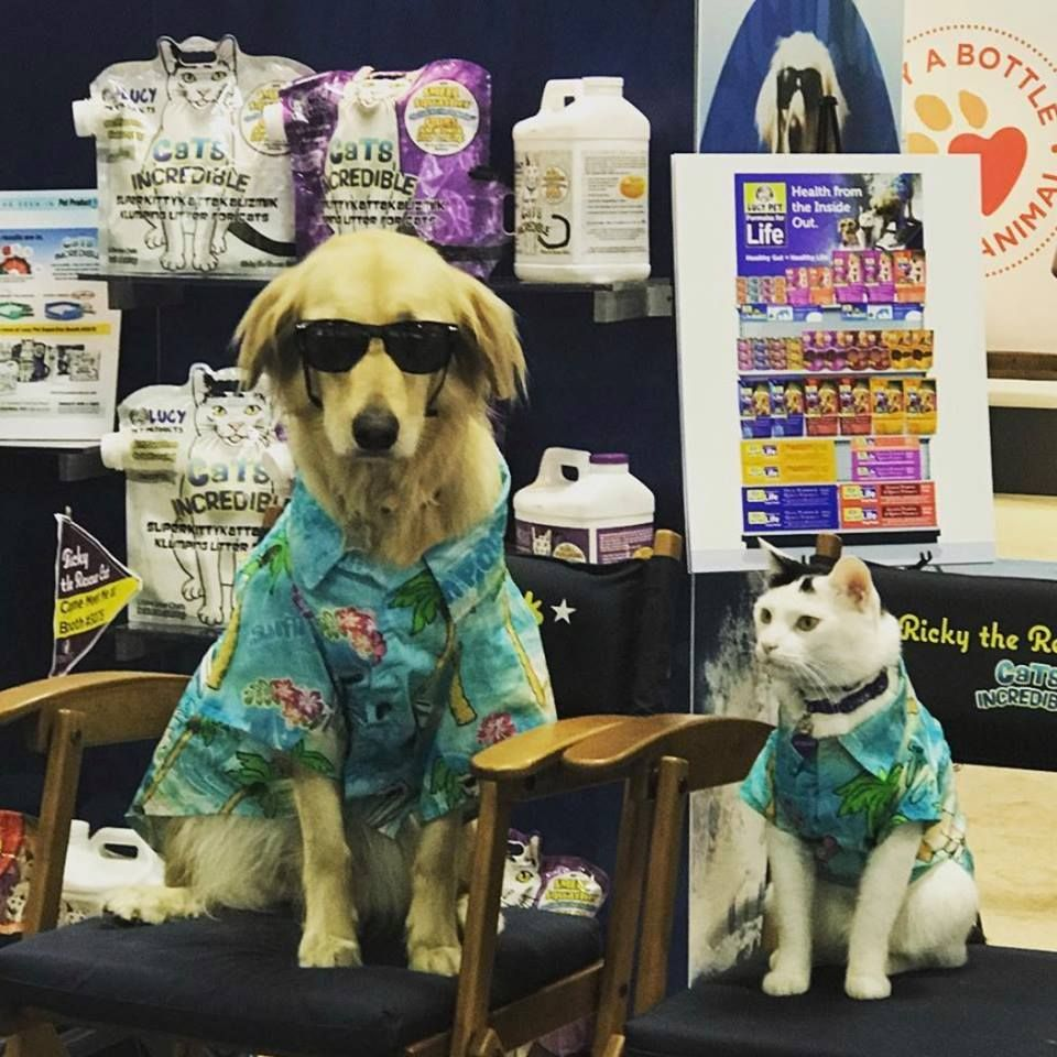 Surfin' Jack and Ricky the Cat are the stars of SuperZoo