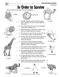 results for animal adaptations worksheet guest the mailbox work pinterest animal. Black Bedroom Furniture Sets. Home Design Ideas
