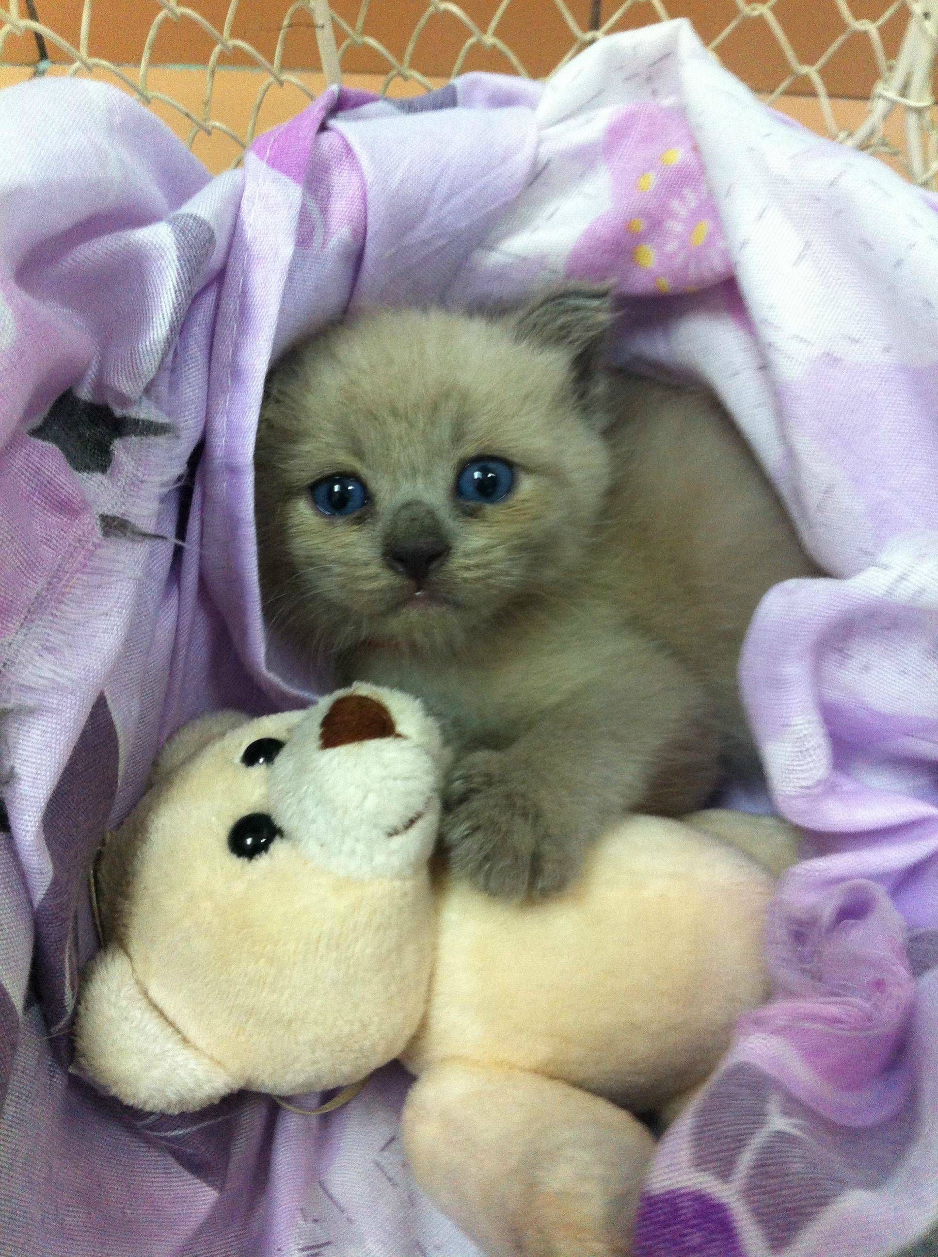 Please Don T Take My Teddy Bear Kittens Cutest Baby Animals Cats And Kittens