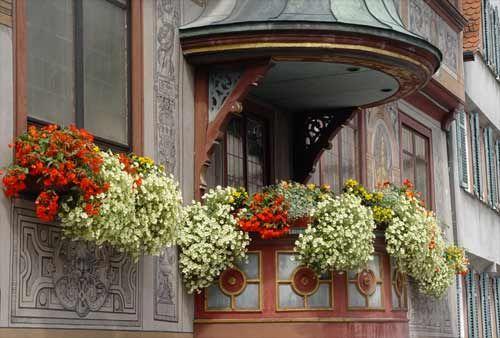 Progettazione realizzazione e manutenzione giardini piante e fiori in balconi e terrazzi