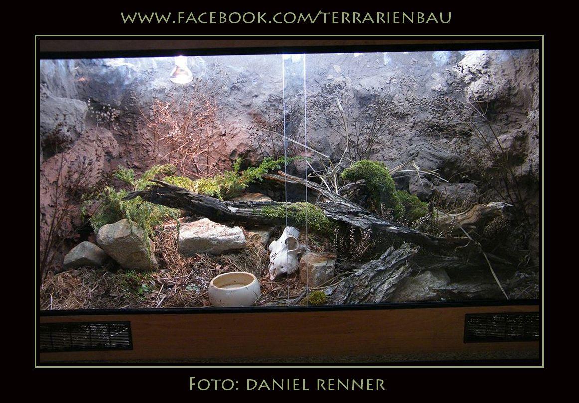 Ein Weiteres Kettennatter Terrarium Von Daniel Renner Mehr Auf Www Facebook Com Terrarienbau Dieses Becken Misst 140 X 80 X 70 C Terrarien Terrarium