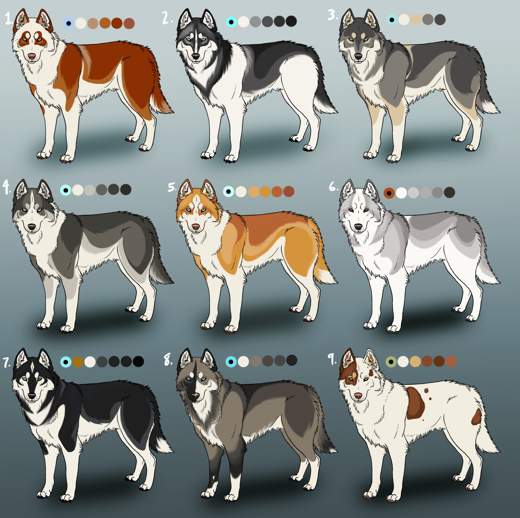 Pure Siberian Husky Adoptables Closed By Sedillo Kennels D5d8q9c